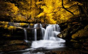 automne, petite rivière, forêt, arbres, cascade, nature