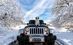 Jeep Wrangler, Jeep, machine, dog, winter, snow