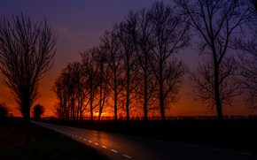 sunset, road, field, trees, landscape