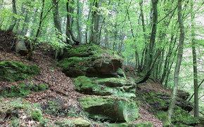 bosque, árboles, piedras, naturaleza