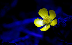 花, 植物群, 宏