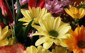 Flores, ramo, flora