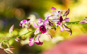 Flowers, flower, ORCHIDS, Macro