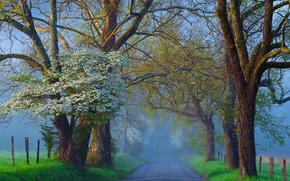 estrada, campo, árvores, nevoeiro, paisagem