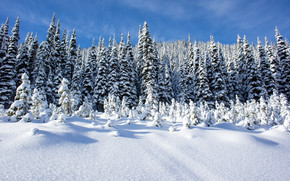 winter, snow, drifts, trees, landscape