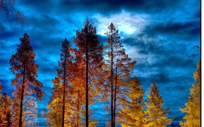 sunset, sky, trees, nature