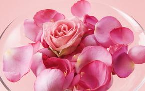 цветы, цветок, роза, розы, композиция