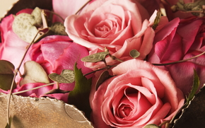 Flowers, flower, rose, Roses, COMPOSITION
