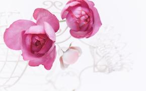 rosa, Roses, Fiori, COMPOSIZIONE
