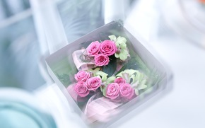 Flowers, rose, Roses, COMPOSITION, capsule