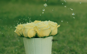 Flowers, rose, Roses, COMPOSITION, bouquet, pot, drops, spray, water