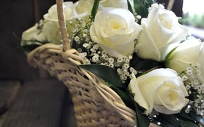 Flowers, flower, rose, Roses, COMPOSITION, bouquet, basket