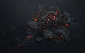 Flowers, flower, rose, Roses, Rendering, BONFIRE, ash, burning, coals