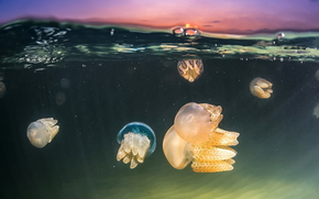 jellyfish, Jellyfish, Underwater World, water, sea, ocean, the inhabitants of the seas and oceans