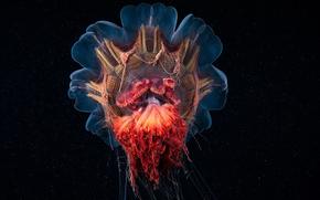 medusa, Medusa, Mundial de Actividades Subacuáticas, agua, mar, océano, los habitantes de los mares y océanos