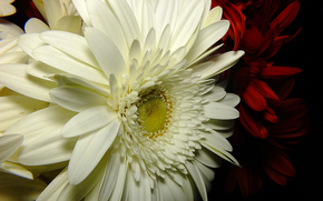 fiore, Fiori, flora