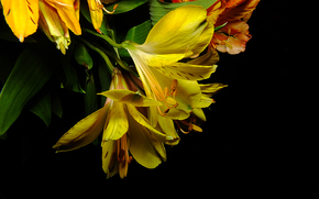 kwiat, Kwiaty, flora, Lilie