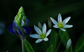 flor, Flores, flora