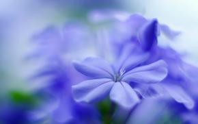 fleur, Fleurs, flore