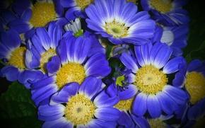 花, フラワーズ, フローラ