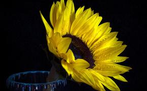 floare, Flori, floră