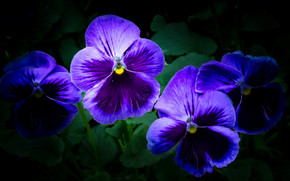 花, 花卉, 植物群