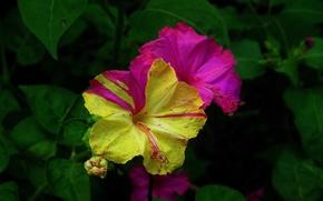 flower, Flowers, flora