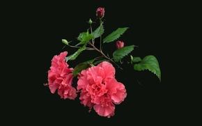 Blume, Blumen, flora