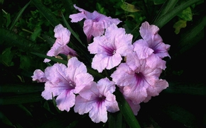 kwiat, Kwiaty, flora
