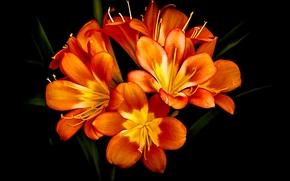 цветок, цветы, флора