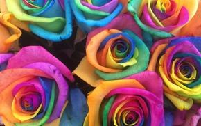 Blume, Blumen, flora, stieg, Roses