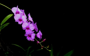 flower, Flowers, flora, orchid