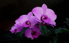 цветок, цветы, флора, орхидея