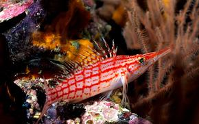 pesce, mare, immersione, Coralli