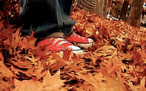 fogliame, autunno, gumshoes