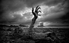 black and white, fear, stump, hand
