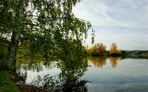 otoo, abedul, lago, bosque