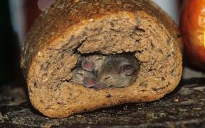 мыши, нора, хлеб