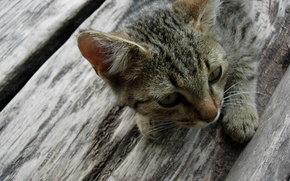 , piso de madeira, cinza