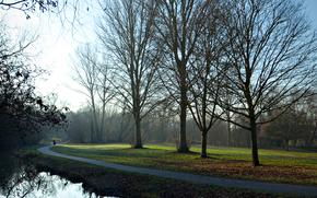 тропа, деревья, утро