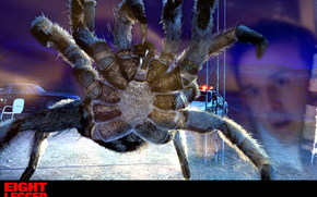 Attack of the spiders, Eight Legged Freaks, film, movies