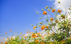 flower, sky, yellow