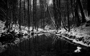 inverno, foresta, stagno, in bianco e nero