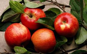 еда, фрукты, яблоки, листья