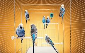 Birds, parrots, cell