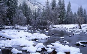 neve, torrente, foresta
