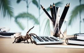 mesa, Lpices, calculadora, araa