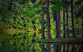 性质, 森林, 云杉, 河, 在水中的倒影