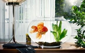 aquarium, goldfish, Algae, gloves, window