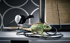 хамелеон, наушники, диски, провода